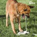 Πετάλι για Παροχή Νερού για Κατοικίδια My Pet Ez